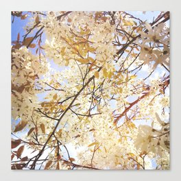 Under my tree Canvas Print