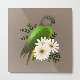 Senegal Parrot Metal Print