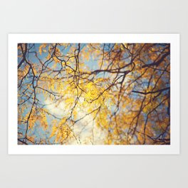 Gold Leaves and Blue Sky Art Print