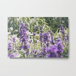 Purple Haze, I Metal Print
