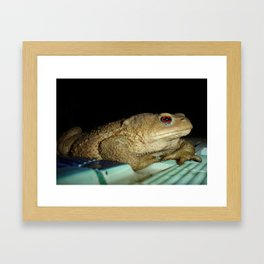 European Common Toad by Poolside At Night Framed Art Print