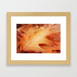 AFE Autumn Leaves, Nature Photography Framed Art Print