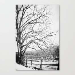 Bare winter Canvas Print