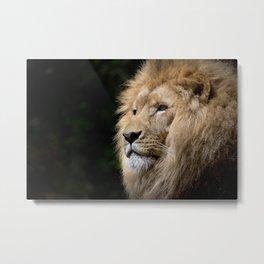 Lion photo Metal Print