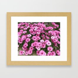 DAISIES IN PINK Framed Art Print