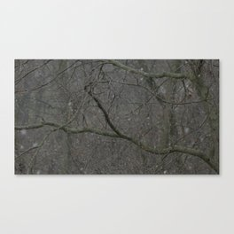 Cold Branches Canvas Print