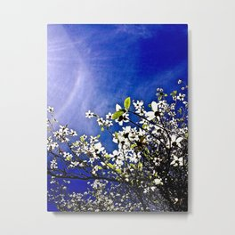 Pacific Dogwood Blossoms Metal Print