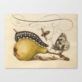 Pear Butterfly Caterpillar Canvas Print