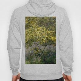 Flowering Acacia Tree Hoody
