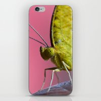 insect iPhone & iPod Skins featuring Insect by TJAguilar Photos