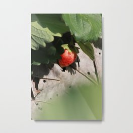 In Srawberry field Metal Print