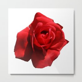 Red Rose Isolated Metal Print