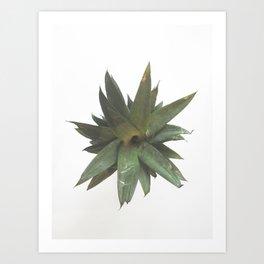 Pineapple Leaves Art Print