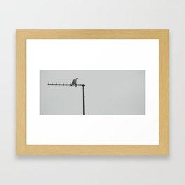bird... Framed Art Print