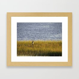 Blue Heron Was On Watch On The Golden Marshland Framed Art Print