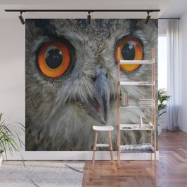 Owl Close up Wall Mural