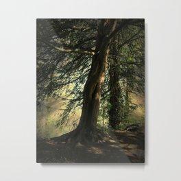 Forest Wakening. Metal Print