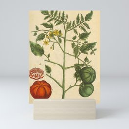 """Tomato by Elizabeth Blackwell from """"A Curious Herbal,"""" 1737 (benefiting The Nature Conservancy) Mini Art Print"""