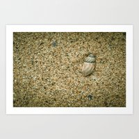 seashell Art Prints featuring Seashell by Errne