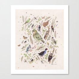 New Zealand Birds Canvas Print