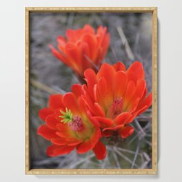 Cactus Flower Series: Neon Red Blooms Serving Tray