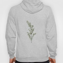 Baby Blue Eucalyptus Watercolor Painting Hoody