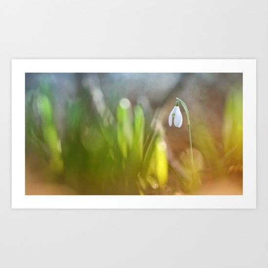 Lonely snowdrop... Art Print