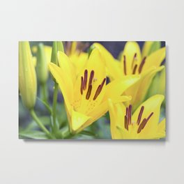 Asiatic Lily 18 Metal Print