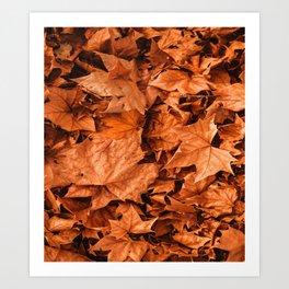 Maple Leaf by Fall Art Print