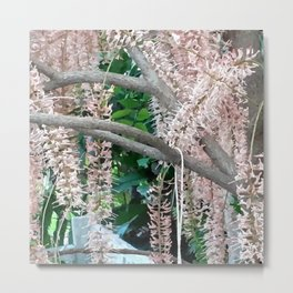 The Pecan Bloom. Metal Print