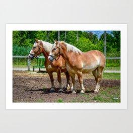"""Equine Duo"" Art Print"