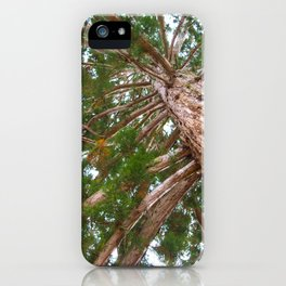 Mammoth pine tree from below iPhone Case