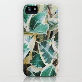 Verigated Rubber Plant iPhone Case