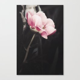 Romancing Pink Canvas Print