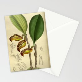 Cryptophoranthus dayanus (= Zootrophion dayanum), Orchidaceae Stationery Cards