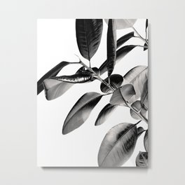 Ficus Elastica Black Gray White Vibes #1 #foliage #decor #art #society6 Metal Print
