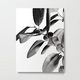 Ficus Elastica Black Gray White Vibes #1 #foliage #decor #art #society6 Metal Print