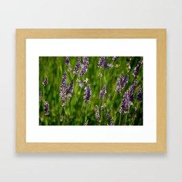 Bee and Lavender  Framed Art Print