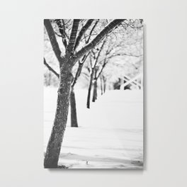 Row of Trees in the Snow Metal Print