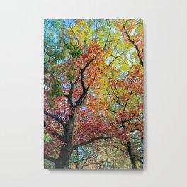 Fall Colors in Warsaw Metal Print
