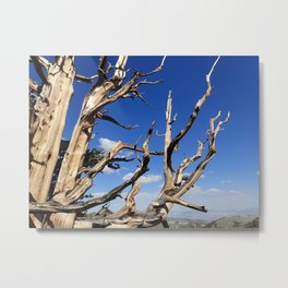 Trees of ancient times Metal Print