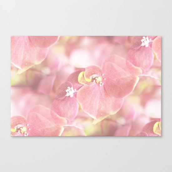 Some Soft Pink Flowers Canvas Print