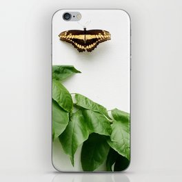 Butterfly Conservatory iPhone Skin