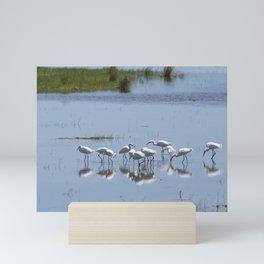 Flock of Snowy Egrets at Chincoteague No. 1 Mini Art Print