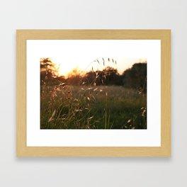 splendore Framed Art Print