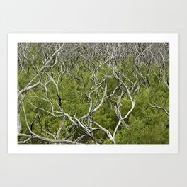 bushfire trees Art Print