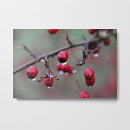 Morning Rain Metal Print
