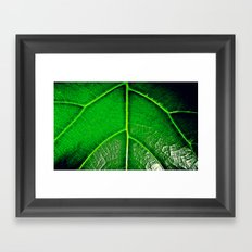 Green Leaf Framed Art Print