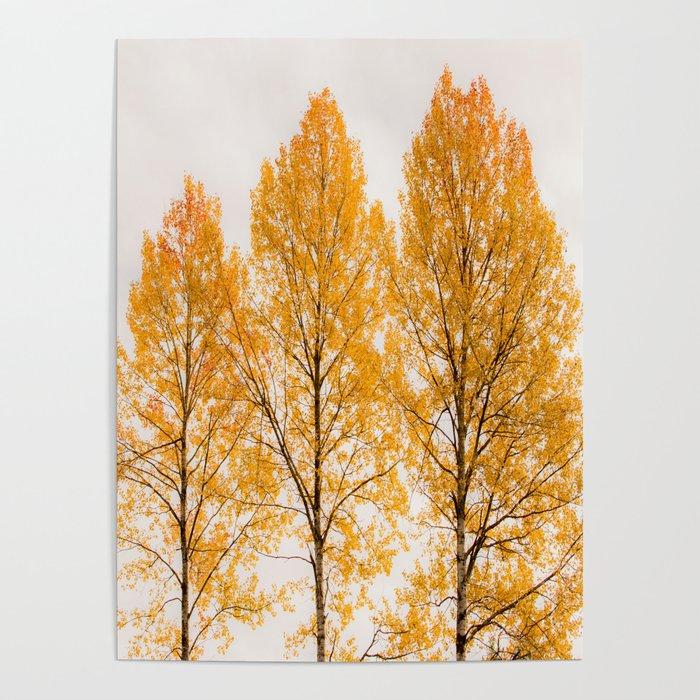 Aspen Trees Decor Society6 Art