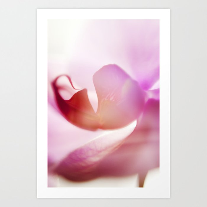 Orchid Abstract Art Print